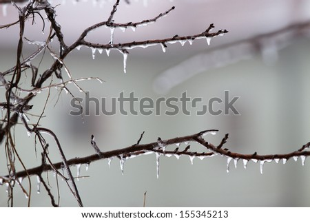 Icicles on the branch in December - stock photo