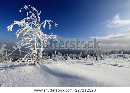 Icing on trees - Bohemian Forest, winter, Czech Republic - stock photo
