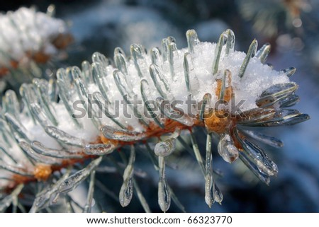 Icing pine-needle up - stock photo