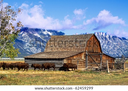 Iconic Mormon Row Barn which is a structure that is a part of Grand Tetons National Parks with bison in the background - stock photo