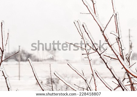 Icy branches of apple trees and snowfall outside the window on a winter day - stock photo