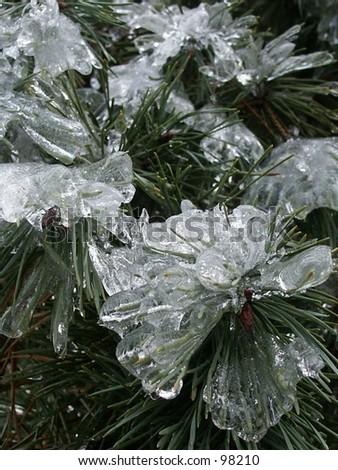 Icy pin needles - stock photo