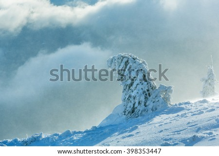 Icy snowy fir trees on winter morning hill in cloudy misty weather.  - stock photo