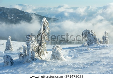 Icy snowy fir trees on winter morning mountain slope in cloudy weather . - stock photo