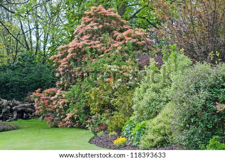 Idylic english country garden in full bloom.  Bright and beautiful maintained lawn and shrubs. - stock photo