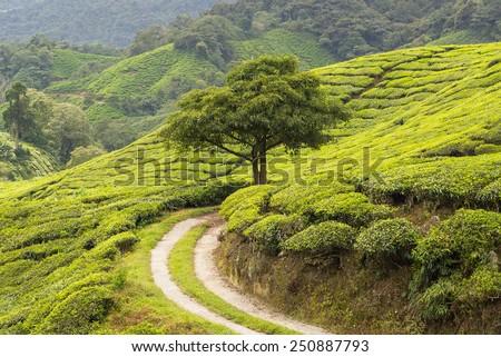 idylic scenery with tree - stock photo