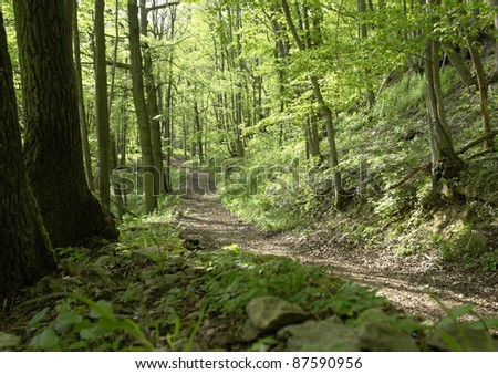 idyllic and peaceful forest track at spring time - stock photo