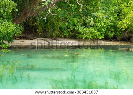 Idyllic beach in the lush green tropical forest, along wild coastline of Malenge in the remote Togean Islands, Central Sulawesi, Indonesia. Selective focus. - stock photo