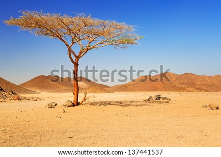 Idyllic desert scenery with single tree, Egypt - stock photo