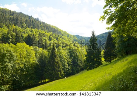 Idyllic green Black Forest meadow with firs and hills - stock photo
