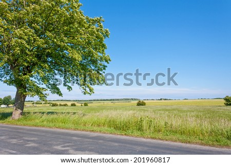 idyllic land, tree near lonely track, field, meadow and blue sky - stock photo