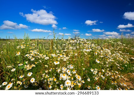Idyllic meadow with camomile flowers in Poland  - stock photo