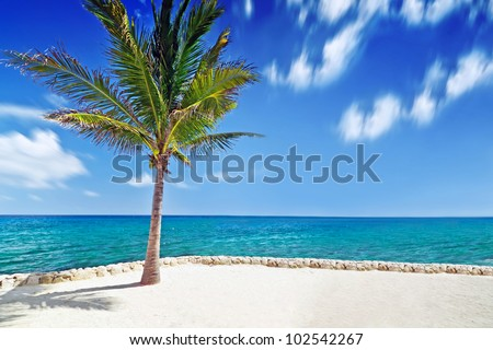 Idyllic scenery of Caribbean sea with lonely palm tree - stock photo