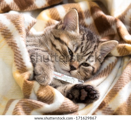 Ill kitten lying with high temperature - stock photo