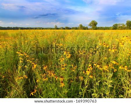 Illinois Prairie Flowers in Bloom - stock photo