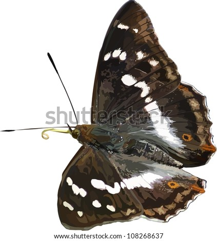 illustrated butterfly - stock photo