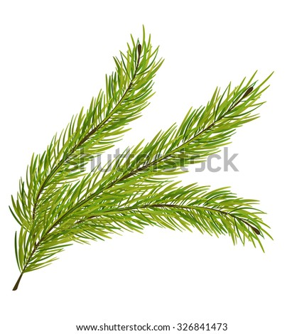 Illustration Fir Branch Isolated on White Background - raster - stock photo