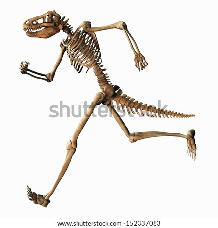 Illustration of a Chimeric Skeleton - stock photo