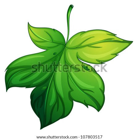 illustration of a green leaf on a white background - stock photo