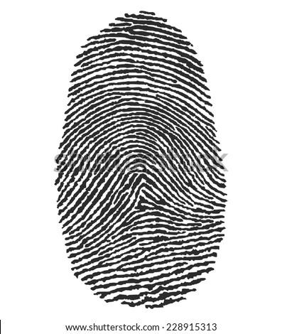 illustration of a human fingerprint - stock photo