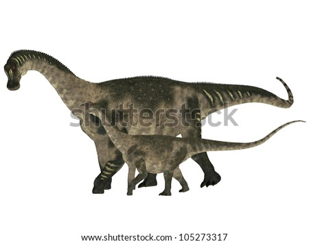 Illustration of an adult and a young Antarctosaurus (dinosaur species) isolated on a white background - stock photo