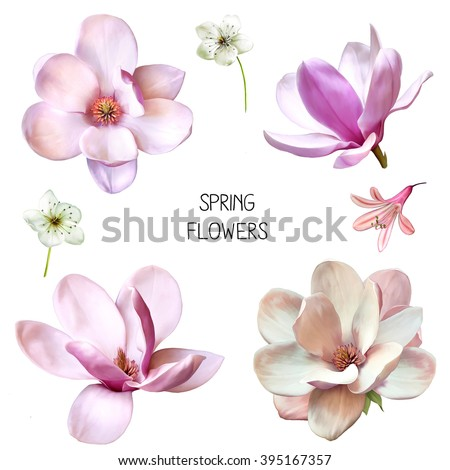 Illustration of Beautiful blue, pink flowers, set of spring flowers: cherry blossoms, bell flower and magnolia flowers in different veiws isolated on white background - stock photo