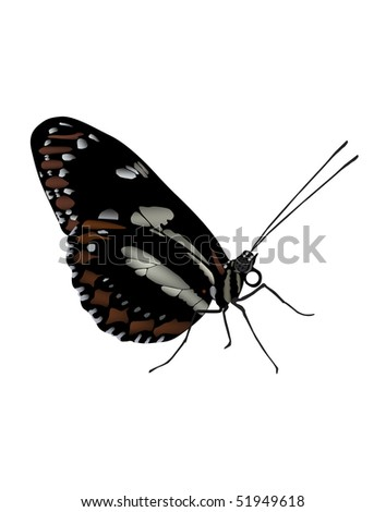 Illustration of  butterfly found in  Ecuador. Vector image also available. - stock photo