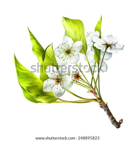 illustration of Cherry blossom flowers with leaves. Tree branch - stock photo