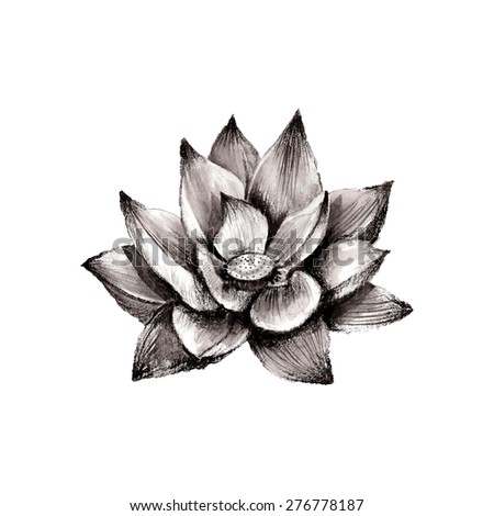 Illustration of hand drawn lotus flower isolated on white background - stock photo