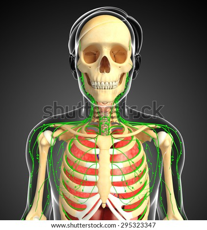 Illustration of Male body lymphatic, skeletal and respiratory system artwork - stock photo