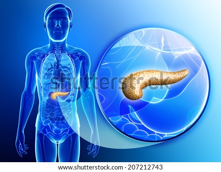 Illustration of male pancreas anatomy - stock photo