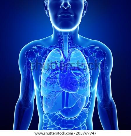 Illustration of male x-ray respiratory system artwork - stock photo