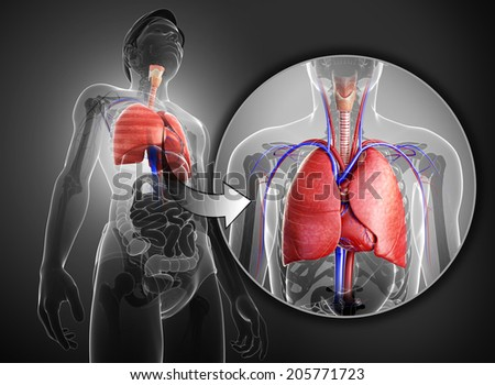 Illustration of male x-ray respiratory system artwork - stock photo