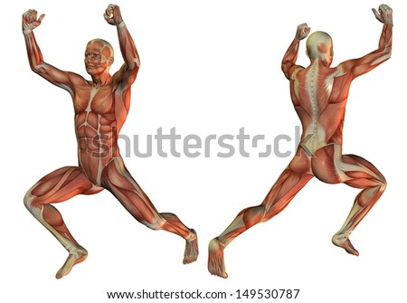 Illustration of muscle structure in a male weightlifter - stock photo