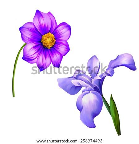 illustration of Purple Dahlia flower and purple iris, Spring flower.Isolated on white background. - stock photo