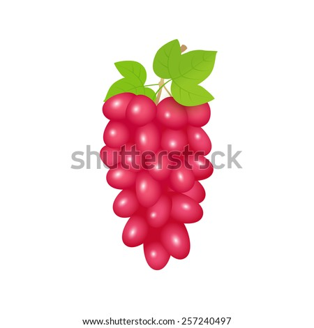 Illustration of red grapes branch. Raster version - stock photo
