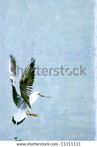 illustration of seagull in flight with plenty of space for text - stock photo
