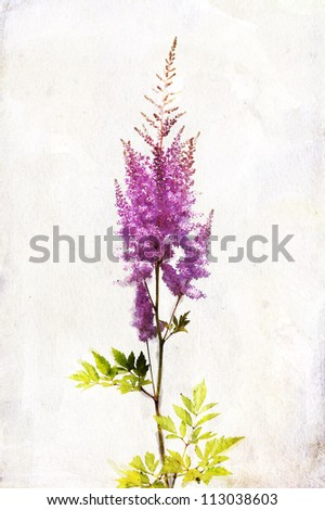 "Illustration of watercolor lilac ""Astilbe"" on a vintage background - stock photo"
