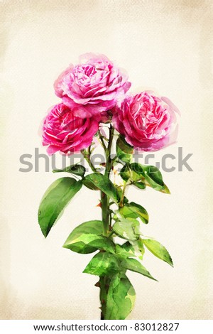 Illustration of watercolor rose on a vintage background - stock photo