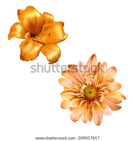 illustration of Yellow lily. isolated on a white background, very beautiful bright orange flower - stock photo