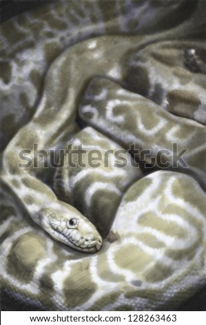 Illustration sketch of  boa, snake, made with digital tablet - stock photo