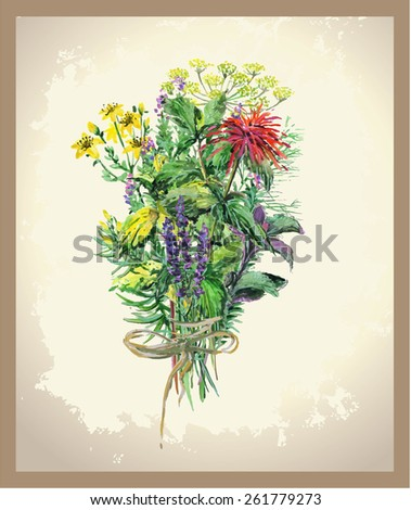Illustration Spicy and curative herbs. Collection of fresh herbs.  - stock photo