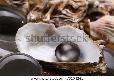 Image of a black pearl in the shell on wet pebbles. - stock photo
