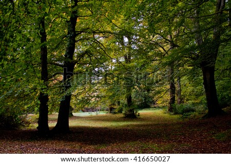 Image of a clearing in a forrest. - stock photo