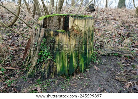Image of a decaying tree trunk covered in moss and ivy - stock photo