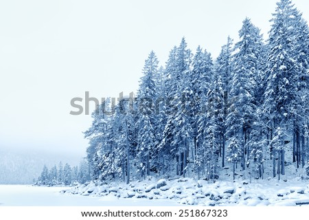 Image of a forest with snow on a cold day in Bavaria in January - stock photo