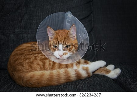 Image of a ginger cat in a neck cone after surgery.  - stock photo