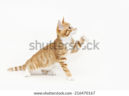 Image of a ginger kitten waving its paw. - stock photo