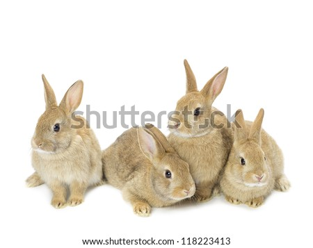 Image of a group of young golden rabbits sitting against white background. - stock photo