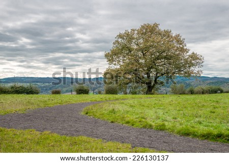 Image of a lone tree with a stormy sky from the summit of Erpeler Ley, one of the seven hills in the Sieben Berge range in Germany - stock photo